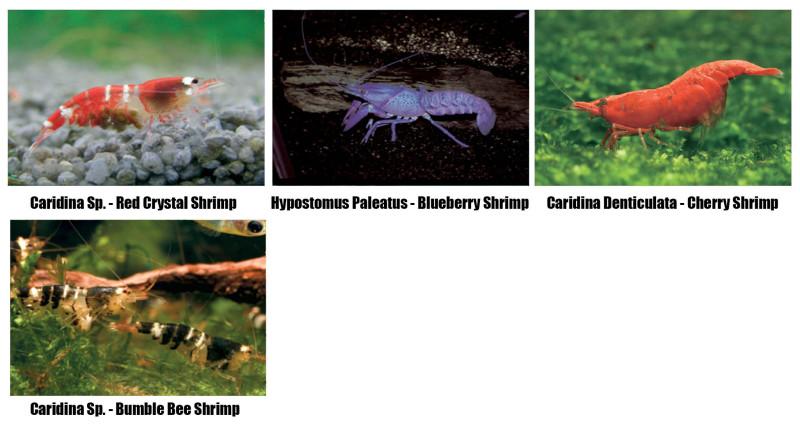 Shrimp_003