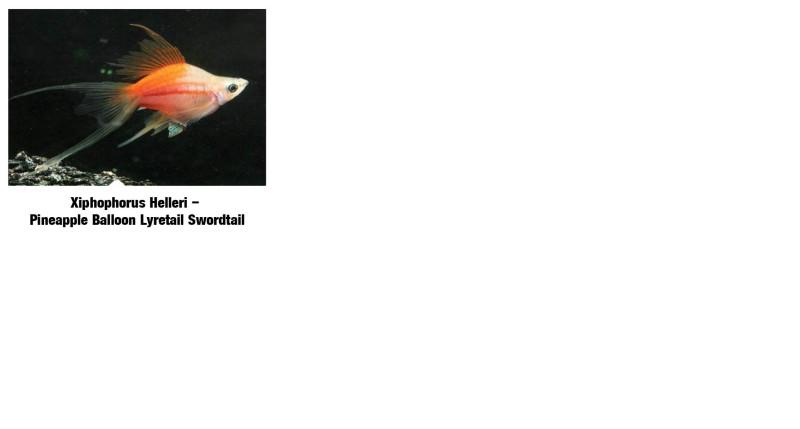 Swordfish_4